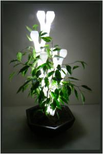 IVY light