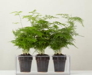 Plantenbak met watersysteem