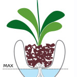 hydrosysteem plantenbak